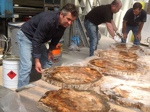 Final selection of the polished fossil wood